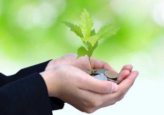 Money tree sapling in hand